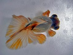 Beautiful butterfly goldfish