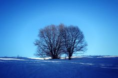 trees in love ♥