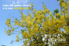 National Cheng Kung University | Enjoy the golden shower, it is your golden age. No.1, Daxue Rd., East Dist., Tainan City, Taiwan