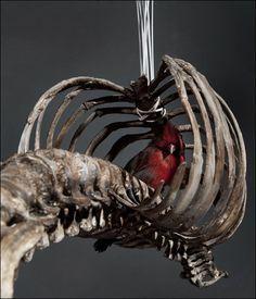 göğüs kafesinden kuş kafesi yapmak
