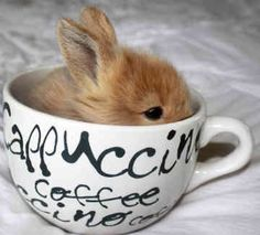 ... I think I have a problem with tiny animals in coffee cups.... *Joe's beanie babies*...