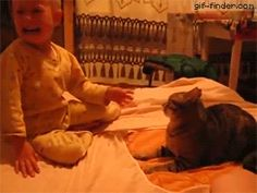 Baby swats cat. Cat fights back
