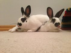 Bunny Protects His Sister from the Noisy Fireworks Thanks,...