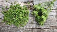 Berce encore : cuisine sauvage , les fruits cette fois ! Parsley, Herbs, Plants, Table, Blog, Lentil Salad, Balsamic Vinegar, Dandelion, Salads