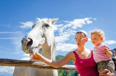 Wanderung zur Tierwelt Rainguthof in Gfrill.  Ein schöner Schimmel