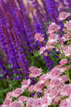 My Favorite Plant Combinations 62