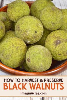 Black Walnut Tree, Nut Recipes, Dehydrated Food, Wild Edibles, The Husk, Preserves, Preserving Food, Health And Wellness, Gardens