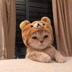 You are in the right place about Cutest Baby Animals Here we offer you the most beautiful pictures a Cute Baby Cats, Cute Little Animals, Cute Cats And Kittens, Cute Funny Animals, Funny Animal Pictures, I Love Cats, Kittens Cutest, Cute Babies, Gatos Cool