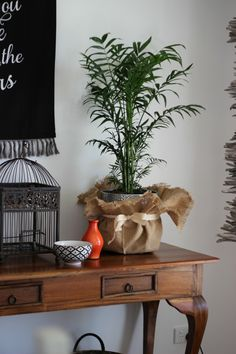 Love the burlap and ribbon around the pot. Indoor plants and their benefits