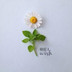 Make a wish | Flickr - Photo Sharing!