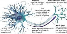 motor neurone disease treatment  www.BrainHealth.Rocks