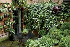 Il piccolo giardino ombroso di Julianne Moore (che ha vinto ieri l'Oscar) nel West Village di Manhattan Sulla parete 'trofei' di Platycerium bifurcatum (Staghorn ferns)
