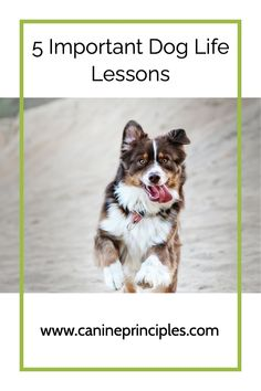 Living with dogs, we must meet their needs and in the important role of dog guardian, we must also make sure they learn the following lessons. Click the pin. #dogscience #dogpsychologycourse #howdogslearn #dogwebinar #positivedogtraining Puppy Care, Dog Care, Puppy Training Classes, Training Tips, Living With Dogs, Positive Dog Training, Dog Poses, Dog Hacks, Dog Behavior