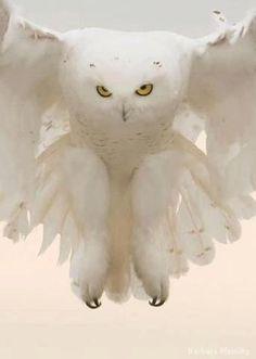 "Spirit owl "" Every take-off is optional. Every landing is mandatory."""