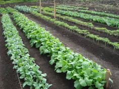 Sprouts, Gardening, Vegetables, Plants, Vegetable Garden, Lawn And Garden, Vegetable Recipes, Plant, Veggies