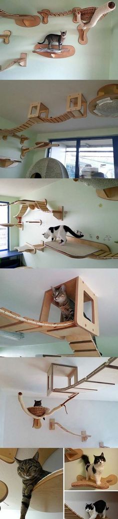 Cats need more places to run around? This DIY indoor run for your cats can be a creative alternative when you lack square footage! This page has helpful hints to help you recreate this pet project.
