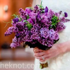 Love lilacs and they're purple!