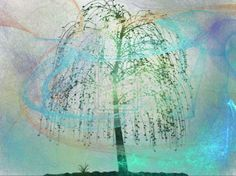 Weeping Willow by lgwildwomanofthenort.deviantart.com on @DeviantArt