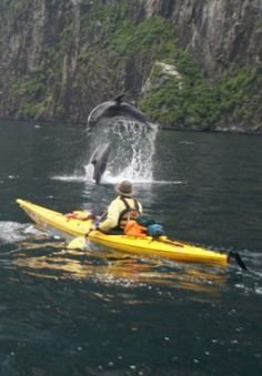 Nothing like being inches above the water while sea kayak and getting close to wildlife.
