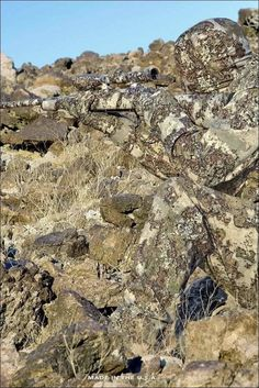 Sniper Camouflage, Best Camouflage, Military Camouflage, Military Weapons, Military Life, Military Art, Ghillie Suit, Special Forces Gear, Military Special Forces
