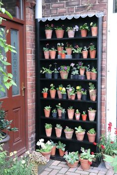 Auricula theatre... I like this idea, but with succulents. It would keep them dry and protected in my very wet home state of Washington ;)