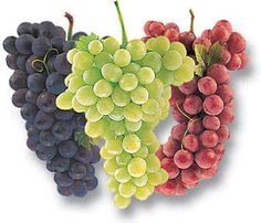 Resveratrol in grapes, and grape juice can often have an analgesic effect similar to aspirin, according to a handful of studies. Experts, in any case, recommend one daily glass of grape juice for women. Varicose Vein Remedy, Varicose Veins, Home Remedies, Natural Remedies, Health Remedies, Health Benefits, Health Tips, Health Care, Diabetes
