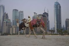 And you start thinking that you may be in the most paradoxical city on earth. | 24 Things You Learn To Love When You Move To Dubai