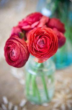 red ranunculus -- love these. hope they come in colors besides red!