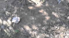 BIGFOOT RESEARCH 22 JULY 2014 SETTING UP FOR NIGHT FALL
