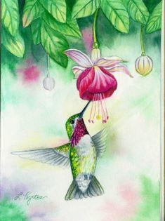 Calliope Hummingbird by EmeraldIsleElf on DeviantArt Bird Paintings On Canvas, Hummingbird Pictures, Flower Art Drawing, Hummingbird Painting, Watercolor Paintings, Watercolors, Gouache Painting, Beautiful Paintings, Unique Paintings