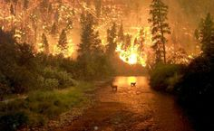 Two elk stand in a stream as a forest fire rages behind them, Bitterroot National Forest, Montana, on Aug. Photo by John McColgan, a fire behavior analyst working for the Alaska Forest. Into The West, Into The Fire, Paraiso Natural, Wild Fire, Big Sky Country, All Nature, Science Nature, We Are The World, Mellow Yellow