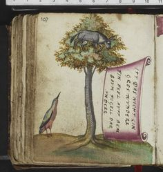 "Ass in the tree, bird beneath it. a proverbial monde renverse motif, the inscription reads ""Ist das nicht ein gros wvnderr/ ein esel avff dem baum fogell darvnder (Is that not a great wonder, an ass in the tree, bird beneath). album amicorum belonging to Schroetter, 1580s. Herzogin Anna Amalia Bibliothek, Weimar. The RAA gives 2 different instances in the Romer (dated 1604) and Schreitter albums -- both in WLB"