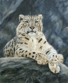 Snow leopard painting by David Stribbling