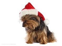 Zvířátka - Vánoce, vánoce přicházejí......
