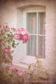 22 new ideas for shabby chic patio ideas pink roses Pink Love, Pretty In Pink, Pale Pink, Rose Window, I Believe In Pink, Pink Houses, Rose Cottage, Everything Pink, Desert Rose