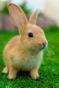 A bunch of wild bunnies sharing their moments with all two-legged creatures around the globe! Like Animals, Animals Of The World, Cute Baby Animals, Animals And Pets, Funny Animals, Cute Baby Bunnies, Cute Cats, Cute Babies, Wild Bunny