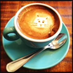 Cats in the coffee at Cafe Madeline from Ditmas Park Corner!