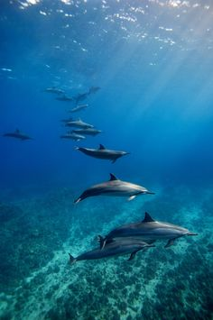 Spinner Dolphins - Kona, Hawaii by James Scott