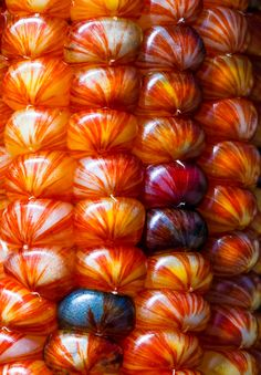 """When a jumping gene """"jumps"""" to different positions within the corn kernel, a color gene is """"turned on"""" or """"turned off"""" depending on whether it lands in a position next to a pigment gene or not. Barbara McClintock's discovery of these jumping genes in corn earned her the Nobel Prize."""
