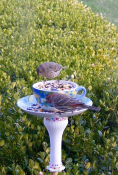 s 18 adorable bird feeders you ll want to make right now, Repurpose Goodwill dishes Bird Feeder Craft, Garden Bird Feeders, Bird Feeder Plans, Humming Bird Feeders, Garden Totems, Teacup Bird Feeders, Humming Bird Bath, Bird House Feeder, Diy Garden