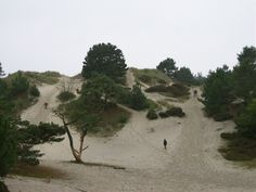 Sand dunes at Schoorl, Holland. I'm writing a scene set here right now this minute and goodness me, that's tough terrain to march soldiers over.