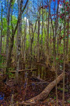 Swampland #3