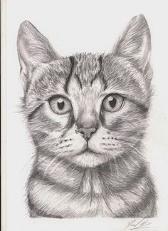 Scaredy cat, pencil, still life sketch, still life drawing, cool drawings Animal Sketches, Art Drawings Sketches, Realistic Drawings, Animal Drawings, Cool Drawings, Pencil Drawings, Still Life Sketch, Still Life Drawing, Kitten Drawing