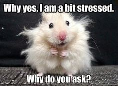 Spin off: meme to describe how you feel at this stage of planning | Weddings, Fun Stuff | Wedding Forums | WeddingWire