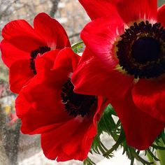 Цветы, алый