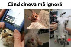 New humor memes animals hilarious 42 Ideas Memes Humor, Sarcasm Humor, Funny Memes, Sarcasm Quotes, Frases Humor, Funny Quotes, Cute Funny Animals, Cute Cats, Funny Cats