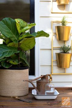 Love these brass vertical planters (and of course the fiddle leaf fig)!