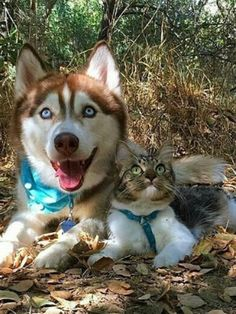 Image of: Fox best Friendscat animalspets Beautiful Dogs Youtube 150 Best Animal Loveunlikely Friends Images On Pinterest In 2018