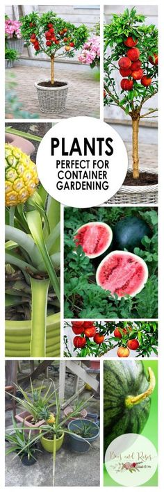 Plants Perfect for Container Gardening