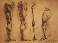 George Bridgeman    Google Image Result for http://2.bp.blogspot.com/-NP7x5slia-Q/TbPMsSHvSTI/AAAAAAAAG14/u7sHe3fkRZo/s400/human_anatomy_24_by_ivany86-d34j7h6.jpg